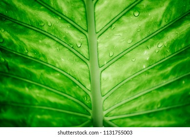 Closeup of green leaf with water drops top view. Nature and ecology abstract design background. Go green concept. Rain forest palm wallpaper