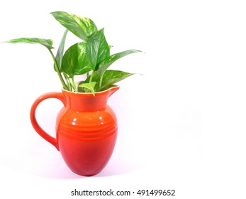 Close-up of green leaves in bright orange jug isolated on white background