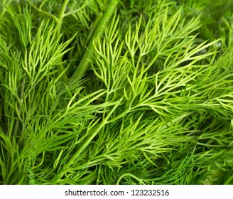 Closeup of green leaves of dill