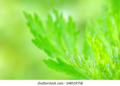 Close-up of green leaves flora