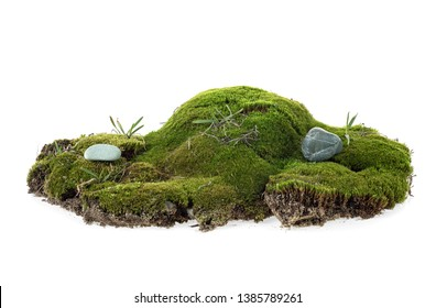 Closeup of green moss isolated on a white background
