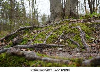 Close-up of green moss in spring with sticks, leaves and twigs on forest floor in Midwest, with trees in background