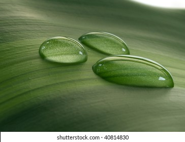 Close-up of green plant leaf