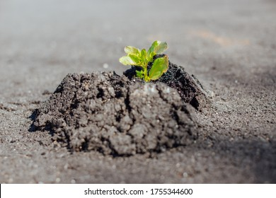 Close-up of green plant makes the way through concrete and asphalt, growing on the road - new life, power of nature, break rules, startup and out of the box thinking concept