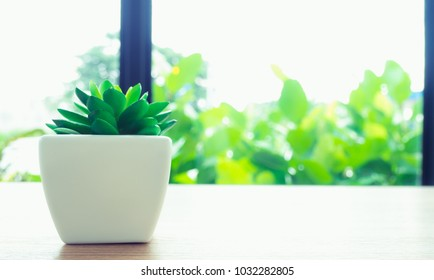 Closeup of green plant in small white ceramic flowerpot on table in minimalist staged model coffee shop interior with bright light from window