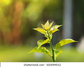Closeup green plant sprout with blurry green background and negative space for text, abundant natural resources concept, green environment