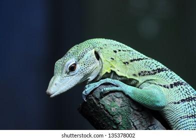 Closeup Green Tree Monitor