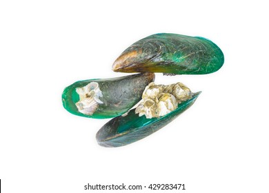 Close-up of green-lipped mussels isolate on white background