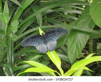 Malaysia Butterfly Images Stock Photos Vectors Shutterstock