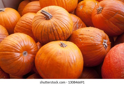 closeup of a group of harvested pumpkins