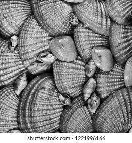 Closeup of a group of many highly textured seashells in black and white