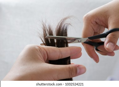 Closeup hairdresser trimming brown hair with scissors.