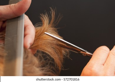 A close-up of hairdresser's hands cutting red hair with a dark background. Scissors, comb, haircut, cutting hair, barber, barber shop, hairstylist, conditioner, shampoo, hairstyle, closeup.