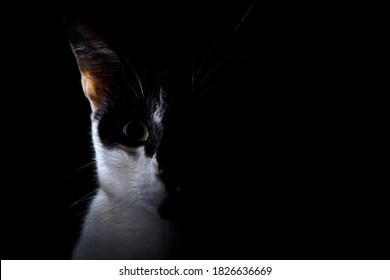 Close-up half face black and white cat in the darkroom