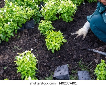 closeup hand gardeners plant a tree