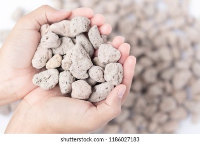 Closeup hand holding pumice stone or volcanic rocks on white background for cactus plant