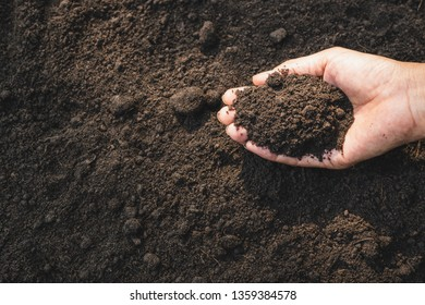Closeup hand of person holding abundance soil for agriculture or planting peach.