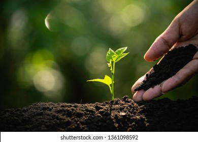 Closeup hand of person holding abundance soil with young plant in hand   for agriculture or planting peach nature concept.