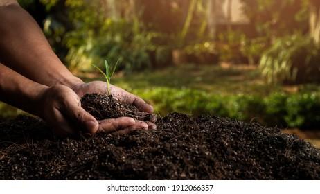 Nahaufnahme von Personen, die reichlich Erde mit Jungpflanzen halten. Konzeptgrüner Weltentag