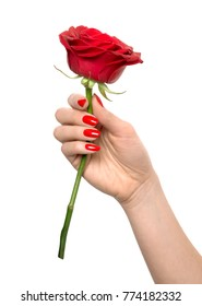 close-up of hand with red nail polish holding a red rose