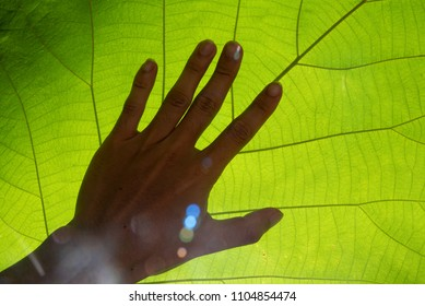 Closeup hand touch nature green leaf texture