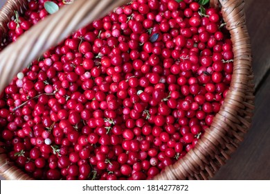 Close-up of handpicked cowberries in a basket. Wild forest berries.