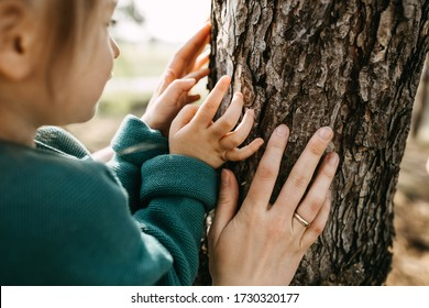 Close-up of hands of a little girl and a woman, touching a tree. Concept of caring and saving forests.
