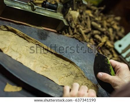 Closeup Hands Making Cigar Tobacco Leaves Stock Photo (Edit