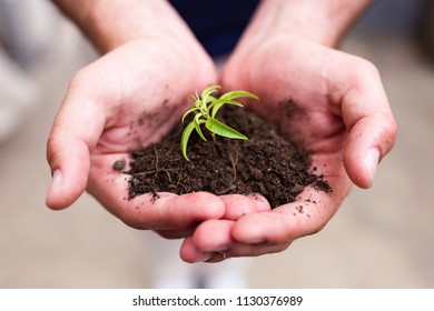 Close-up of hands of man holding a young plant. New life concept.