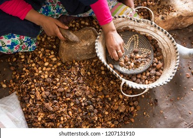 Close-up of hands of Moroccan women breaking Argan nuts (Argania spinosa) in cooperative in Morocco. This fruit is widely used in cooking and mainly in the cosmetics industry.