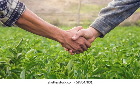 closeup hands two farmer shaking hands.