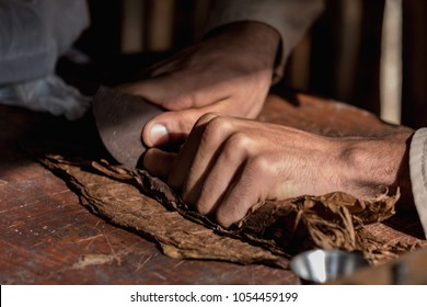 Close-up of hands wrapped from the dry tobacco leaves of a true Cuban cigar. Handmade cigar. Vinales, Cuba