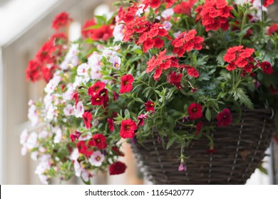Close-up: hanging wooden basket with beautiful flowers of red verbena and white petunia is on outside of a house. Concept: English garden style and gardening.