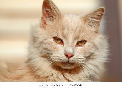 Closeup Of A Happy Cat
