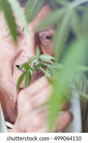 Closeup of happy senior woman smelling Cannabis plant.