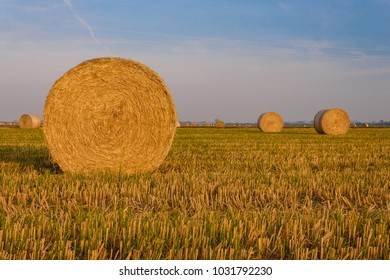 close-up of a hay cylindrical bale in a farmland /expanse of hay cylindrical bales in a farmland at sunset