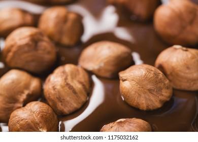 Close-up hazelnuts in melted dark chocolate