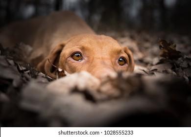 Closeup head of dog in winter fallen leaves