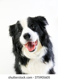 A closeup of a head of a happy dog