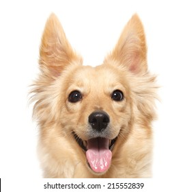 closeup head  terrier dog isolated on white