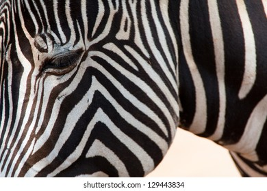 Close-up of the head of a Zebra