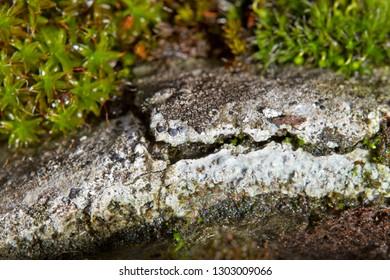Chrysotile Asbestos Images, Stock Photos & Vectors