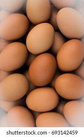 Closeup hen eggs ,Fresh chicken eggs in the farm