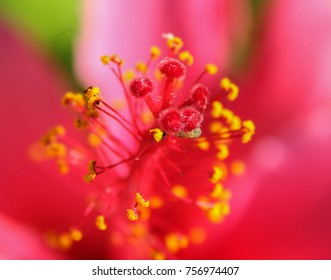 Close-up of hibiscis