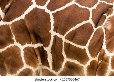 Closeup of the hide and spots of a giraffe form abstract background pattern