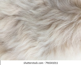 Closeup high definition image of textured dog hair.