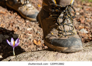 a close-up of hiker's foots in the mountain with flower