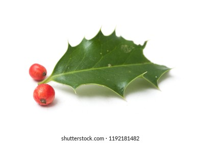closeup of holy leaf and red berries on white background