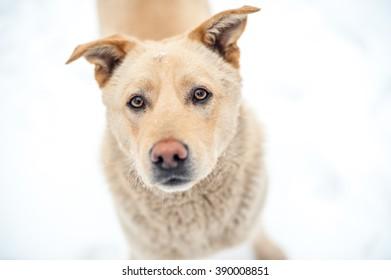 Close-up homless dog portrait