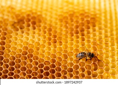 Close-up of a honeycomb with honey and working bees